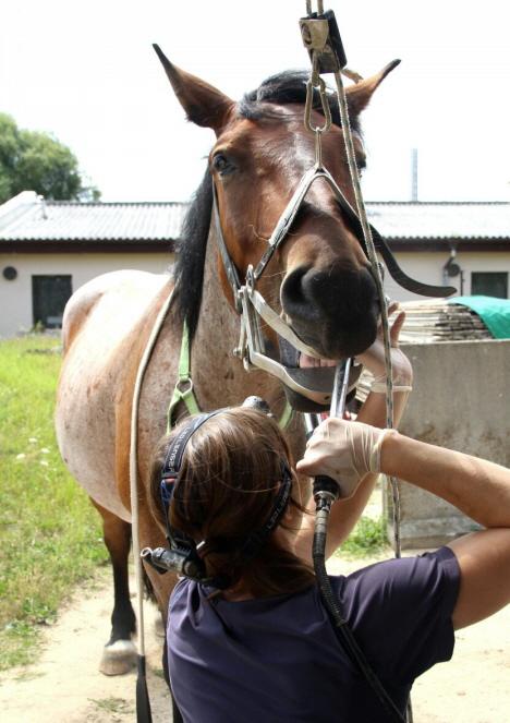 Pferdepraxis